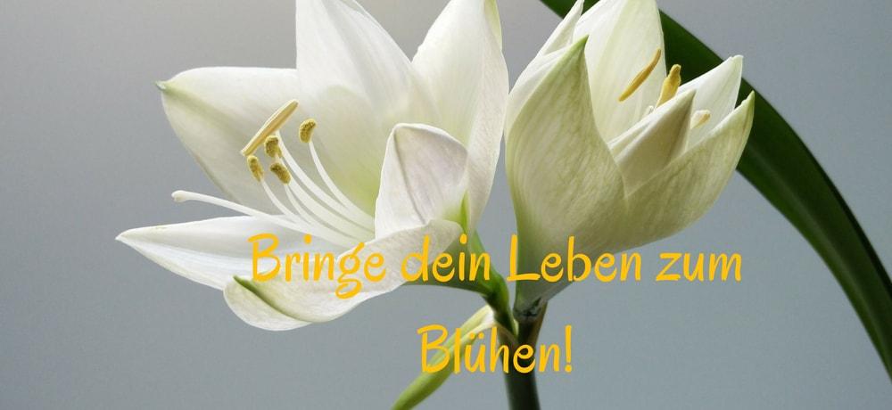 Bring dein Leben zum Blühen